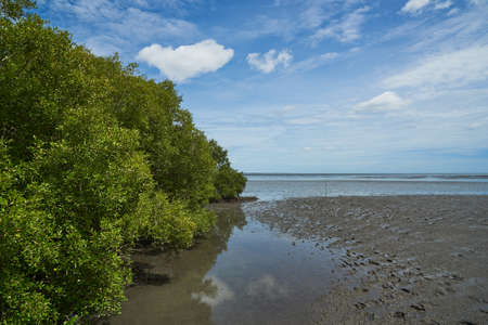 Scene of mangrove tree on the sea shore and blue sky background at The Leam Phak Bia  environmental study and development project, Phetchaburi, Thailand Stockfoto