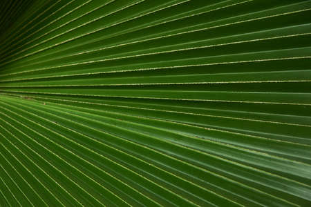 Close-up view pattern of  beautiful palm leaf