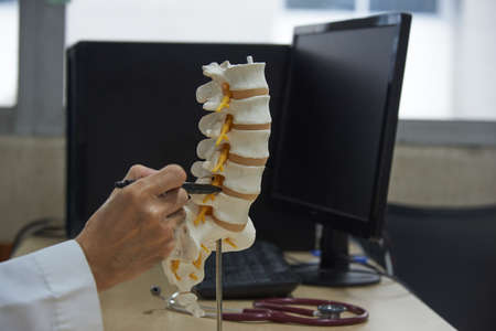 Doctor using pen to demonstratting anatomy of human lumbar spine model in medical office Banque d'images