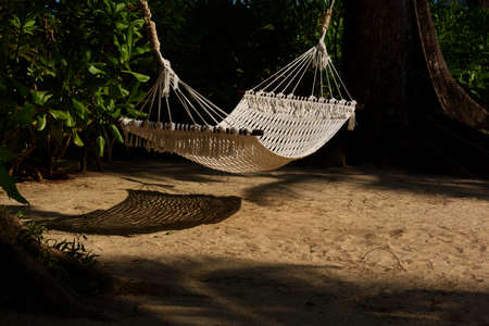 A white rope hammock hanging between the trees in sunny day
