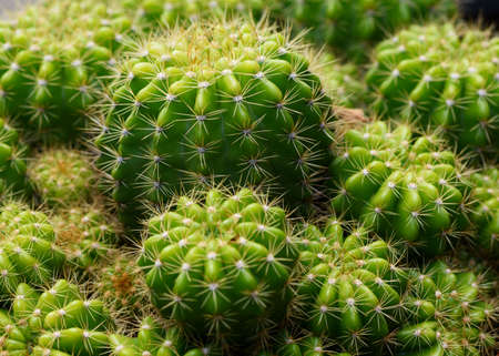 Macrophotography of cactus in flower pot