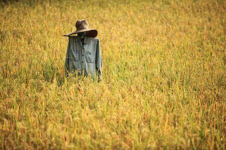 espantapajaros: espantap�jaros en campo amarillo