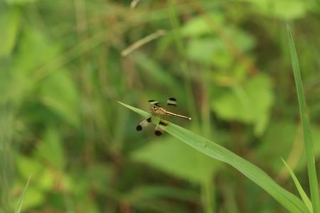 anisoptera: Anisoptera Stock Photo