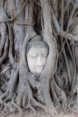 buddha image: Head buddha image in roots.