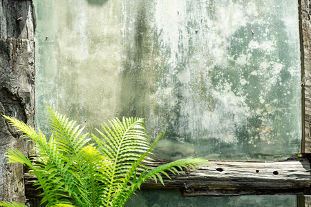 Green bush palm on old grey cement wall texture with wooden bordor. Tropical decoration style garden. Material or element for exterior concept.