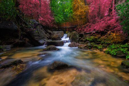 秋の森の素晴らしい滝