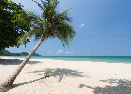 tropical island: Coconut palm with white sand and blue sky.