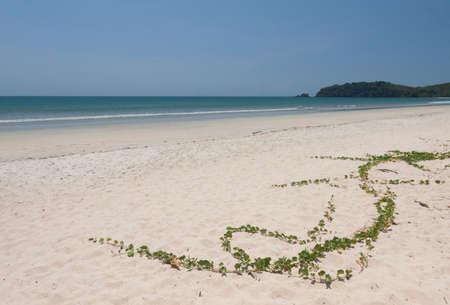 pes caprae: Ipomoea pes-caprae on white sand beach.