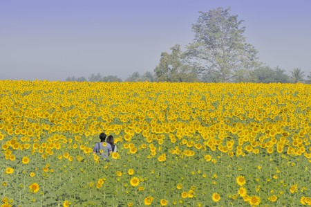 It is a bright sunny day. A couple are in the middle of sunflower field. Stock Photo - 6881051