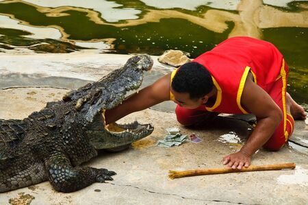 SAMUTPRAKARN, THAILAND - JUNE 11: A man was putting his arm in a crocodile's mouth in a crocodile show at Samutprakarn crocodile farm & zoo June 11, 2010 in Samutprakarn, Thailand. Stock Photo - 7289071