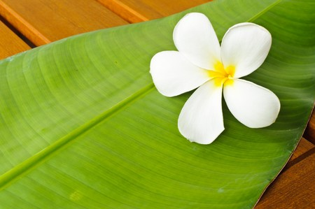 A white plumeria on a green leaf on top of a wooden table