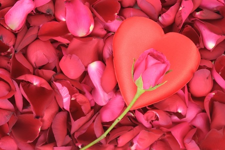 big heart shape and pink rose on red rose petals Stock Photo