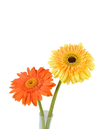 Orange and yellow  daisy-gerbera in a glass vase isolated on white with copy space. photo