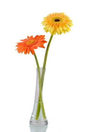 Orange and yellow  daisy-gerbera in a glass vase isolated on white. photo