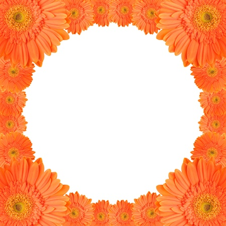 orange daisy-gerbera flowers create a circular frame on white background photo