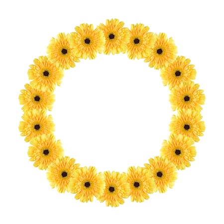 Yellow daisy-gerbera flowers create a circle frame on white background photo