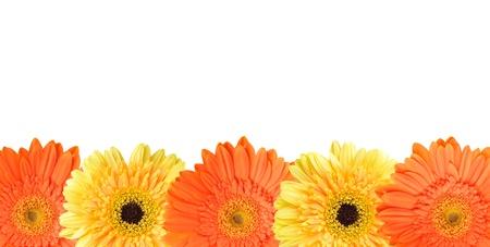 Jaune et orange daisy-gerbera isolé sur blanc avec copie espace sur le dessus. Banque d'images - 10398432