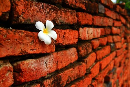 flower in wall Stock Photo