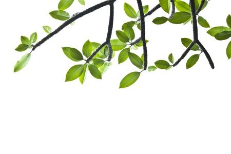 arri�re-plan de feuilles vert printemps