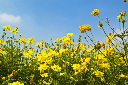 yellow flower against blue sky background