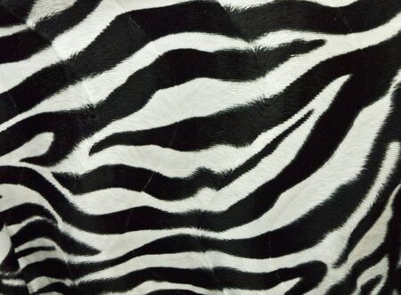 Zebra skin background Stock Photo - 9878123