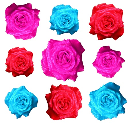 blue,red and pink rose isolated on white background Stock Photo