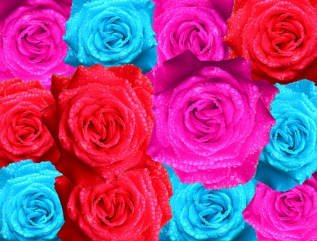 colorful of roses background