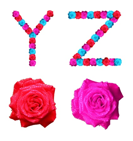 colorful of rose alphabet - letter Y,Z