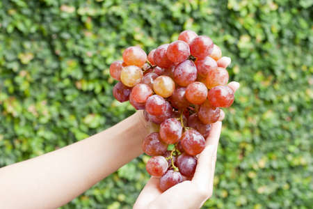 Red grapes hold by two hands
