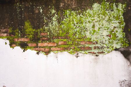 Old mossy wall in Thailand, Background Texture  photo