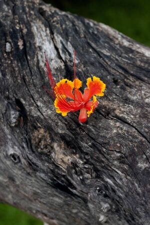 Beautiful orange flower on the old wood  photo