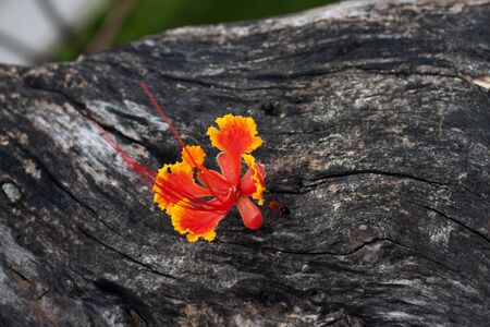 Beautiful orange flower on the old wood with small orange  insect  photo