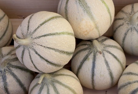 A group of freshly picked cantalopes for sale at the marke  Stock Photo