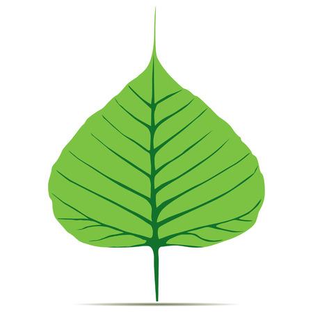 Bodhi (Sacred Fig) leaf Illustration. Illustration