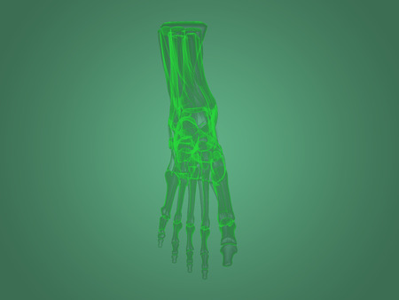 Xray Foot Anatomy Stock Photo Picture And Royalty Free Image Image