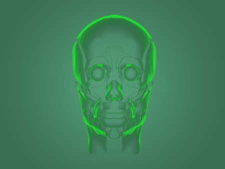 Xray head anatomy
