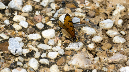 nymphalis: a pair of butterflies perching on a rock