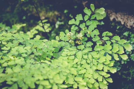 assort: green leaf background, nature background