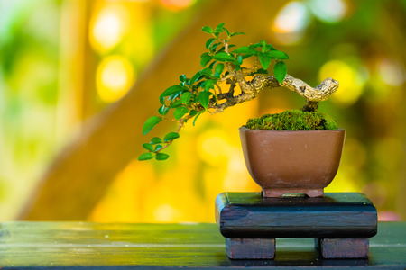 Close up shot bonsai on bokeh background, nature background Stock Photo
