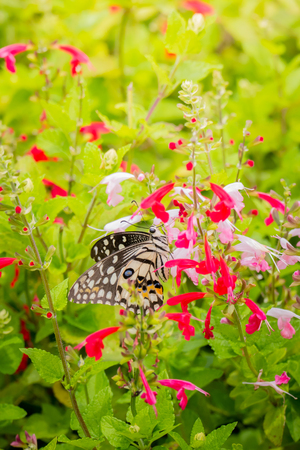 giant sunflower: Beautiful Butterfly on Colorful Flower, nature background