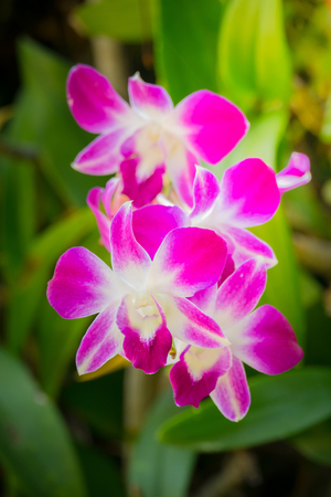Beautiful blooming orchids in forest, On the bright sunshine Stock Photo