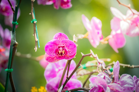 botanical garden: Beautiful blooming orchids in forest, On the bright sunshine Stock Photo