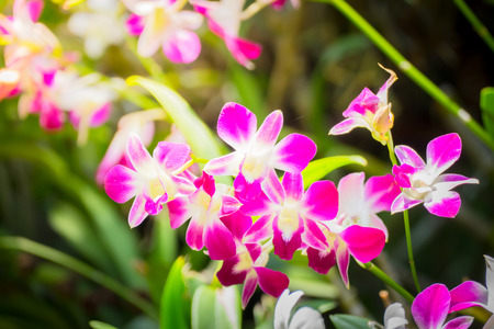 epiphyte: Beautiful blooming orchids in forest, On the bright sunshine Stock Photo