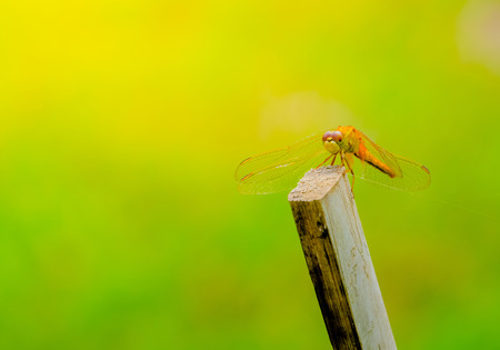 dragonfly outdoor on wet morning, nature background Stock Photo
