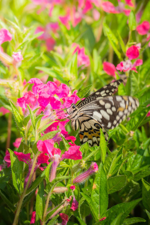 the magnificent: Beautiful Butterfly on Colorful Flower, nature background
