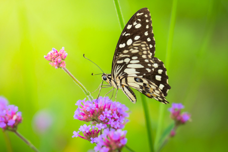 Beautiful Butterfly on Colorful Flower, nature background