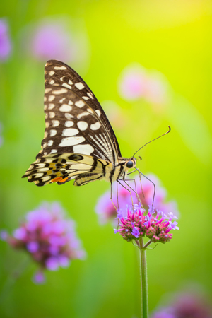 background: Beautiful Butterfly on Colorful Flower, nature background