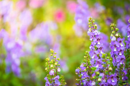 色とりどりの花、背景の自然の背景画像 写真素材