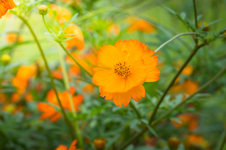 The background image of the colorful flowers, background nature Stok Fotoğraf - 84279775