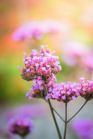カラフルな花の背景画像、背景の性質 写真素材